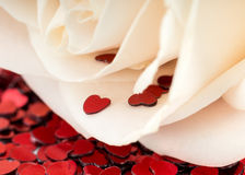 Valentines decoration of white rose Stock Image
