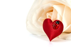 Valentines decoration of white rose Stock Images