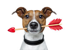 Valentines dog Stock Image