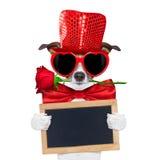 Valentines dog in love Stock Image