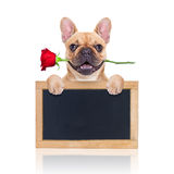 Valentines dog Royalty Free Stock Photography
