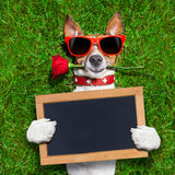 Valentines dog Stock Images