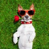 Valentines dog Royalty Free Stock Photo