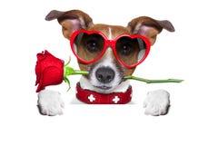 Valentines dog Stock Photography