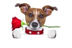 Valentines dog Stock Image