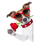 Valentines dog Royalty Free Stock Images
