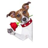 Valentines dog Royalty Free Stock Photos