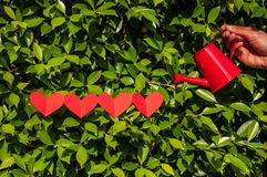 Valentines, four hearts  with watering can on grass. Royalty Free Stock Image