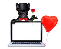 Valentines groom dog Stock Photo