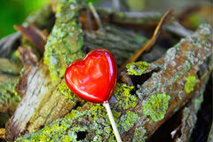 Valentines  heart in garden as background Stock Photos