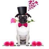Valentines love sick dog stock photo