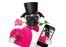 Valentines love sick dog Royalty Free Stock Photography