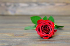 Valentines rose Stock Photography