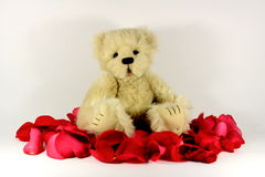 Valentines Teddy bear. Cute little teddy bear sitting on rose petals royalty free stock photography