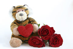 Valentines tiger. Tiger with heart and red roses isolated on white Stock Photos