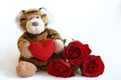 Valentines tiger. Tiger with heart and red roses isolated on white Royalty Free Stock Image