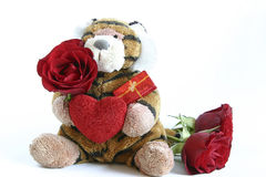 Valentines tiger. Tiger with heart and red roses isolated on white Stock Images
