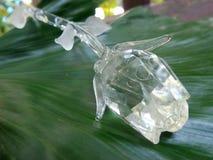 Valentinexponeringsglas steg på det gröna bladet Arkivfoto