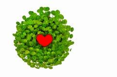 Valentinförälskelsesymbol som omges av den gröna liljan Arkivfoton