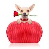 Valentinhund Arkivfoton