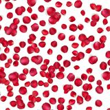 Valentinkort med kronblad av en ros 10 eps Royaltyfri Fotografi