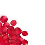 Valentinkort - röda roskronblad 10 eps Arkivfoton