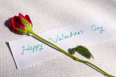 Valentinsday. Red Rose lying on white cloth with a note Happy Valentines Day written on it Royalty Free Stock Image