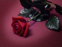 Valentinsgrüße Stockfotografie