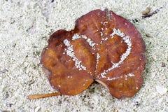 Valentinsgruß auf Sand Lizenzfreie Stockfotos