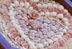 Valentinsgruß des Seemanns von Seashells lizenzfreies stockbild