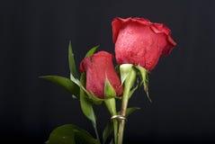 Valentinsgruß-Rosen Stockfotos
