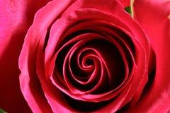 Valentinsgruß rote Rose Nahaufnahme von stieg Lizenzfreies Stockbild