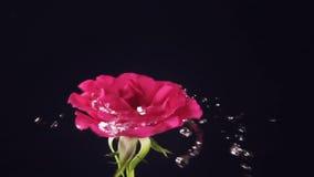 Valentinsgruß ` s Tag rosafarben und Wasserspritzen, Zeitlupe stock video