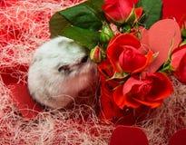 Valentinsgruß ` s Tagespostkarte in den roten Tönen mit einer Rose, Herzen Lizenzfreie Stockbilder