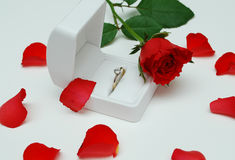 Valentinsgruß stieg 2 Lizenzfreie Stockbilder