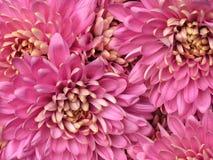 Valentinsgruß-Tagesmama Stockbilder