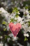 Valentinsgrußherz, das an einem Baumast hängt Lizenzfreie Stockfotografie