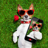 Valentinsgrußhund Lizenzfreies Stockbild