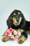 Valentinsgrußhund mit einem Blumenstrauß von rosa Rosen Stockfoto