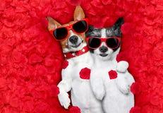 Valentinsgrußpaare von Hunden in der Liebe lizenzfreie stockfotografie