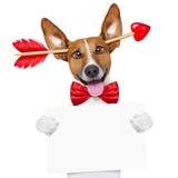 Valentinsgrußtageshund verrückt in der Liebe stockbild