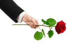 Valentinstag- und Tagesthema der Frauen: die Hand des Mannes in einer Klage, die eine rote Rose lokalisiert auf weißem Hintergrun Stockbild
