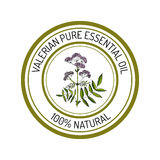 Valerian, essential oil label, aromatic plant Stock Photography
