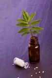 Valerian globule. Homeopathic alternative medicine Royalty Free Stock Photos