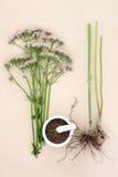 Valerian Herb Imagenes de archivo