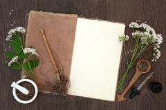 Valerian Herb Flowers and Root Royalty Free Stock Photography