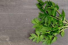 Valerian Herb Leaves no fundo da ardósia fotografia de stock