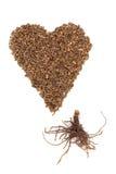Valerian Herb Root Stock Image