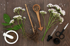 Valerian Herb Root y flores Fotografía de archivo