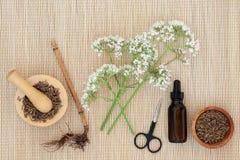 Valerian Herbal Medicine imagen de archivo libre de regalías